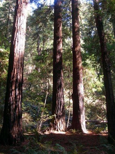 Эти деревья никто не знает в лицо. Видны только ноги...