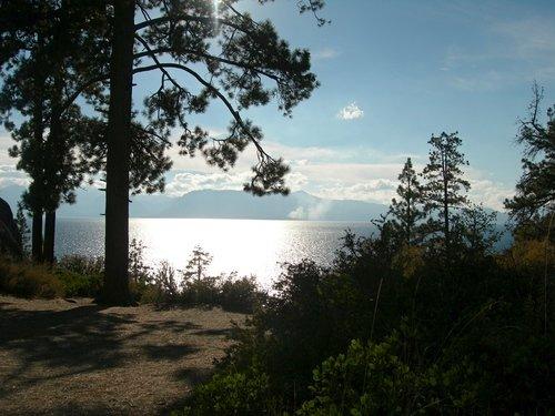 Сосны на берегу озера Тахо