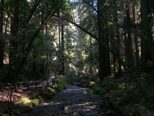 Лес с самыми длинными тенями...