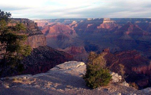 Гранд-каньон. Деревце - созерцатель.