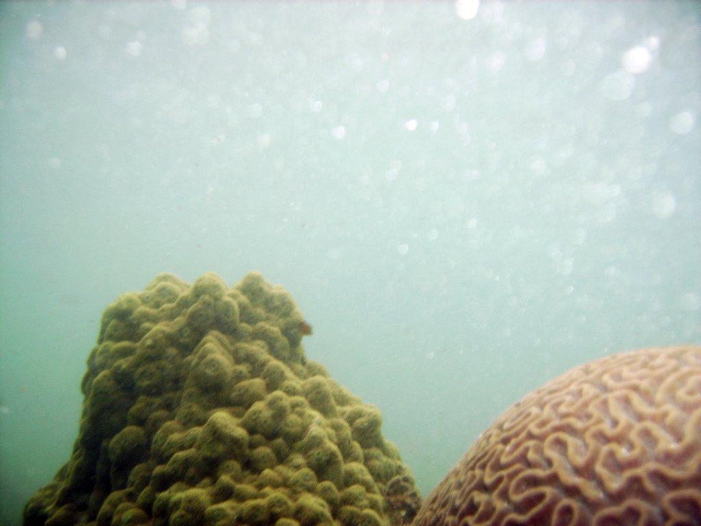 Подводный разум