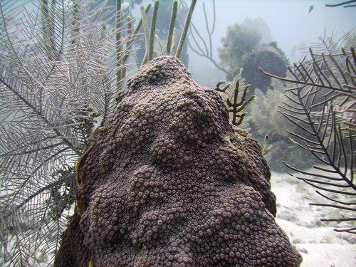 Подводный Бабай