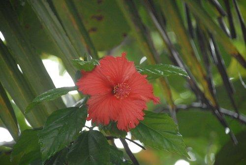 Зимний цветок Гондураса