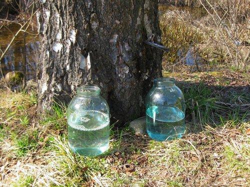 Березовый сок - подарок весны