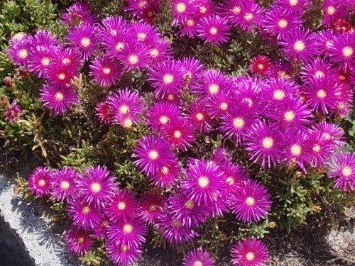 Цветы Израиля