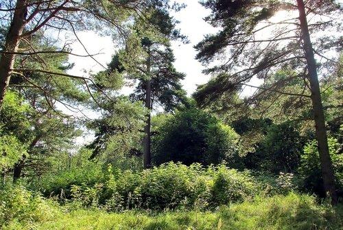 А дальше лес