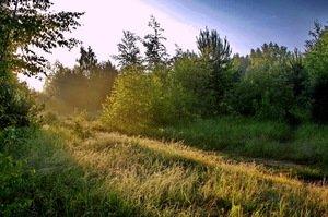 летним утром
