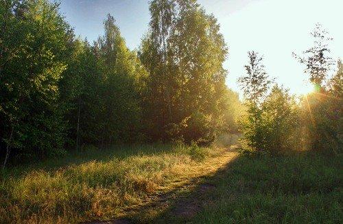 летнее утро