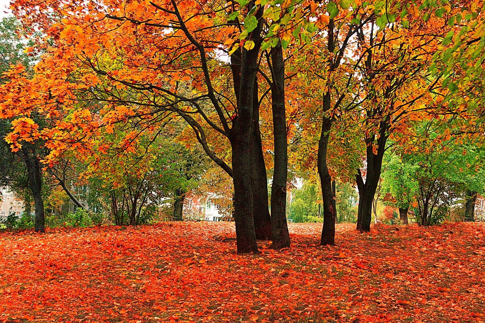 Осень пришла картинки красивые, открыток элитные открытки