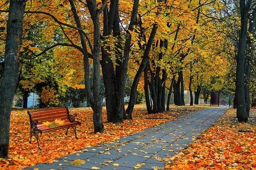 Падают, падают листья