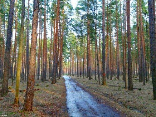 Весенний день в лесу( апрель)