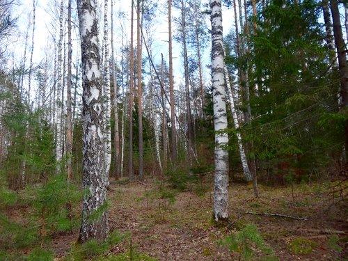 Апрель в лесу