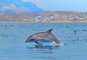 Прыгали дельфины и кружили чайки