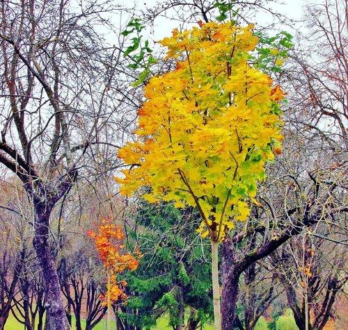 Последние листья