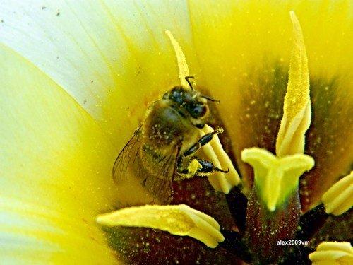 Попала пчёлка в рай