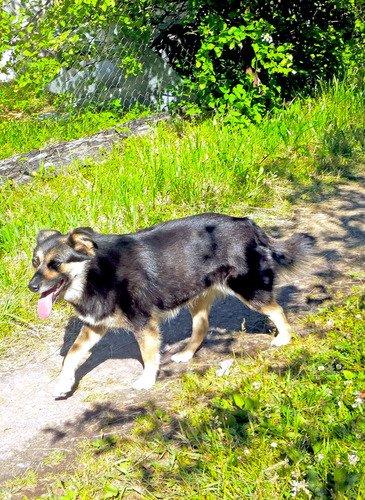 Собака и фонтан