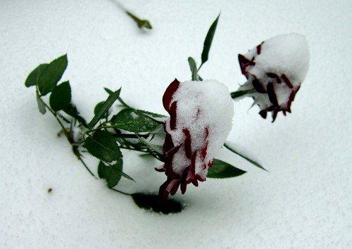 Первый снегопад.