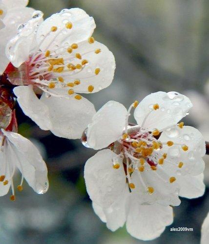 Цветы и капельки