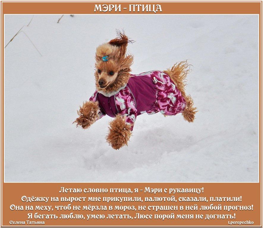 МЭРИ - ПТИЦА