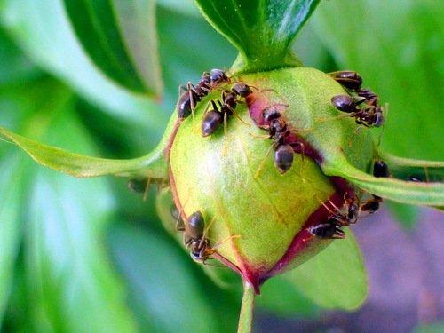 Маленькая муравьиная планета