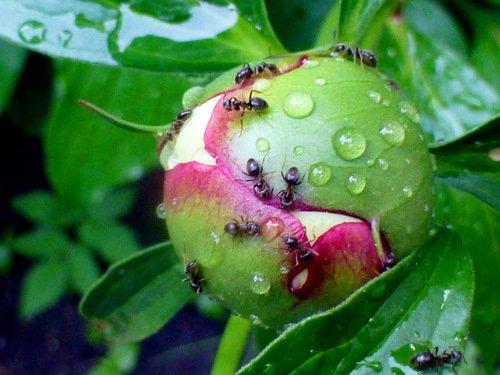 Дождливая планета муравьев