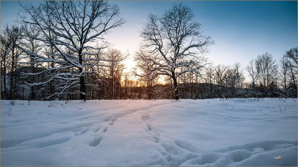 Тихий вечер января