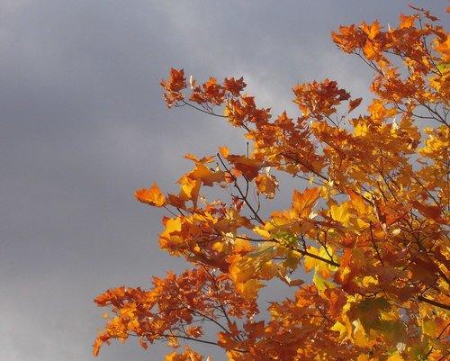 На осеннем ветру - пока дЕржатся