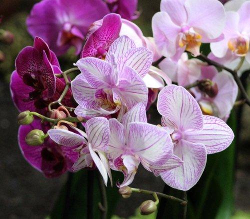 Удивительная красота в Ботаническом