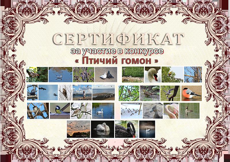 Результаты конкурса «Птичий гомон»