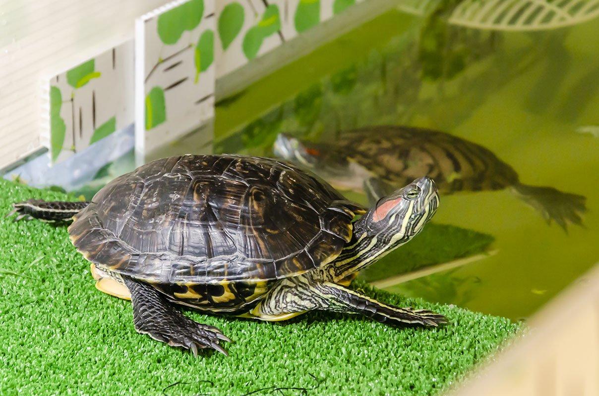 Разновидности черепах фото и название