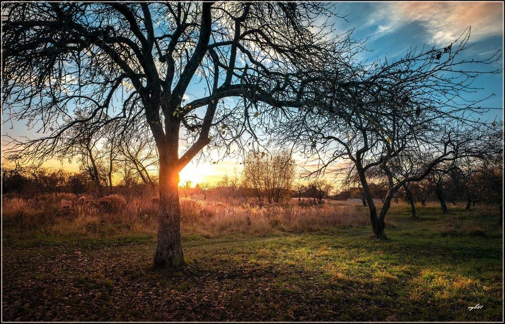 Осенний старый сад