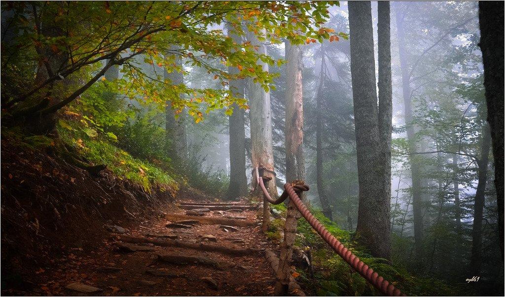 Тропа в туман