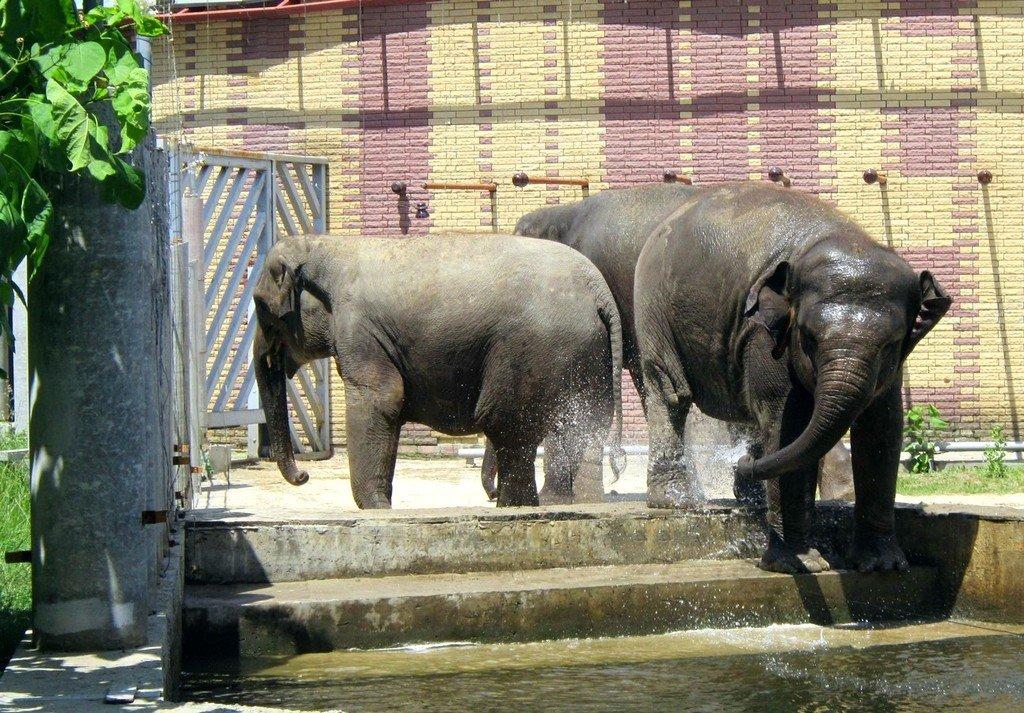Три слона. История из жизни Ростовского зоопарка.