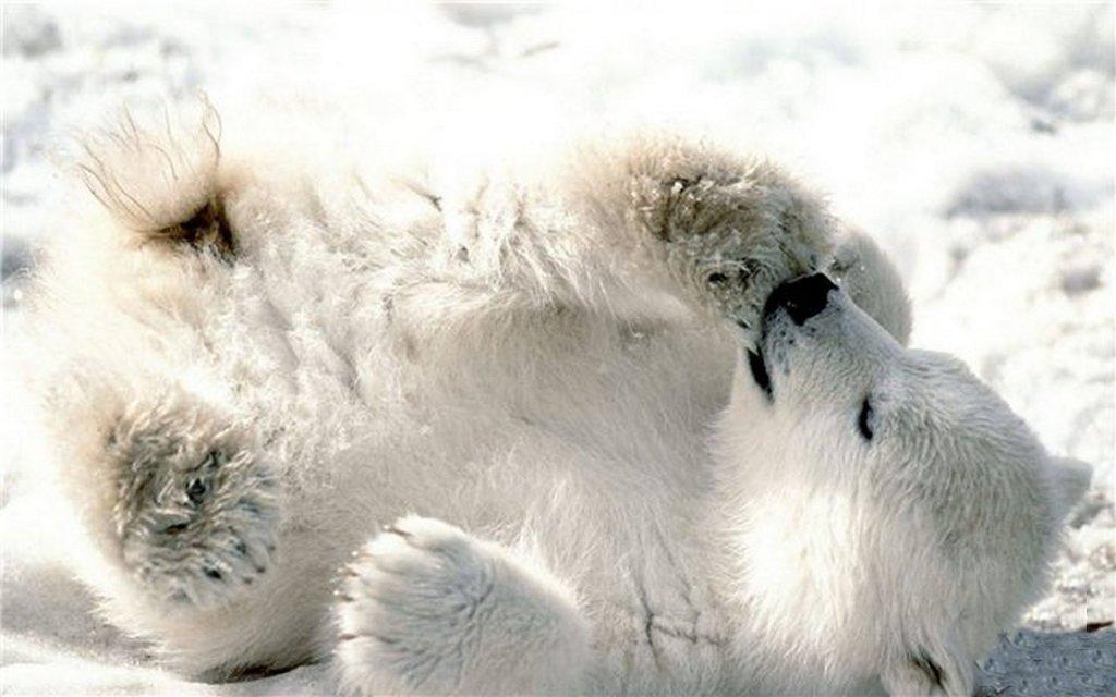 Медведица Нюша – человеческий детёныш.