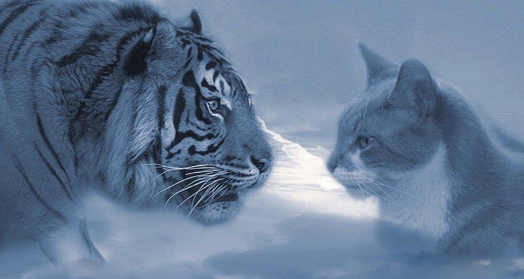 Среди тигров встречаются особенные личности...