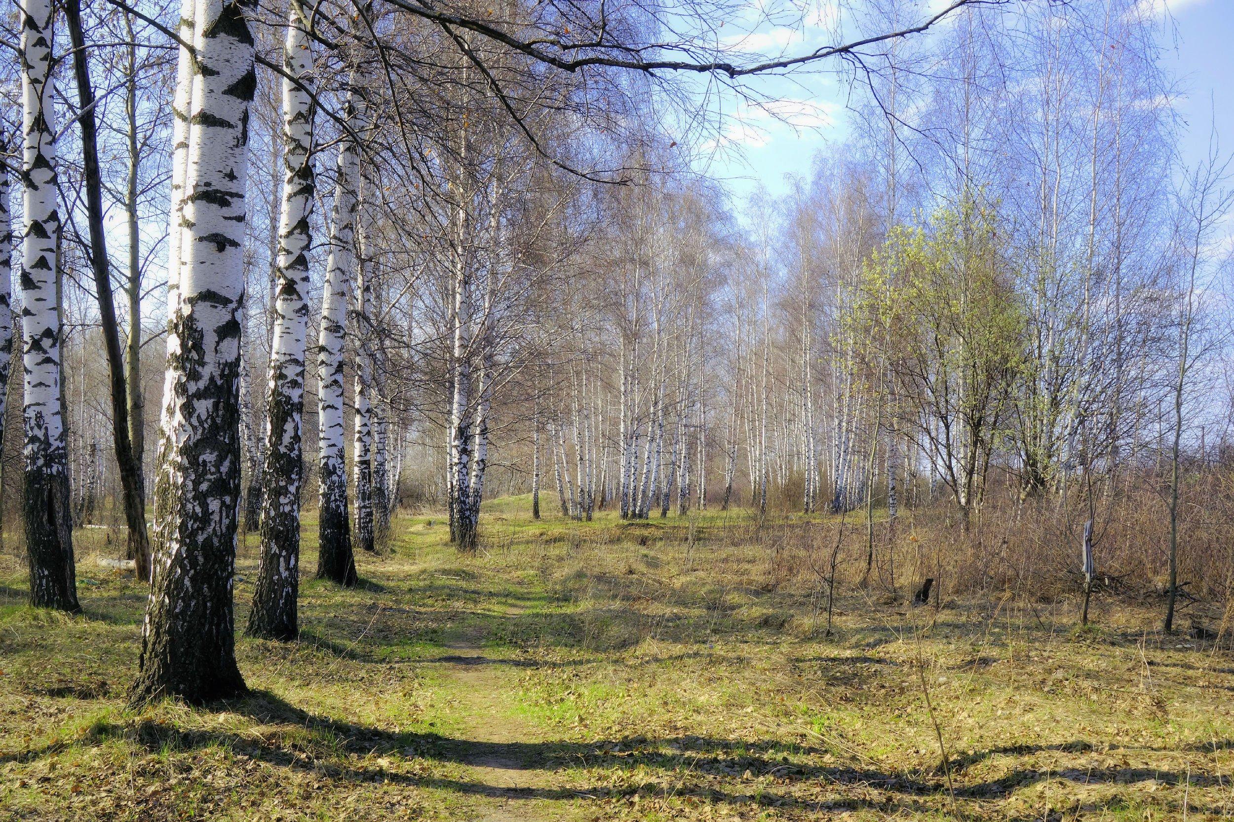 гем фотообои поздняя весна лес использую магические психоэнергетические