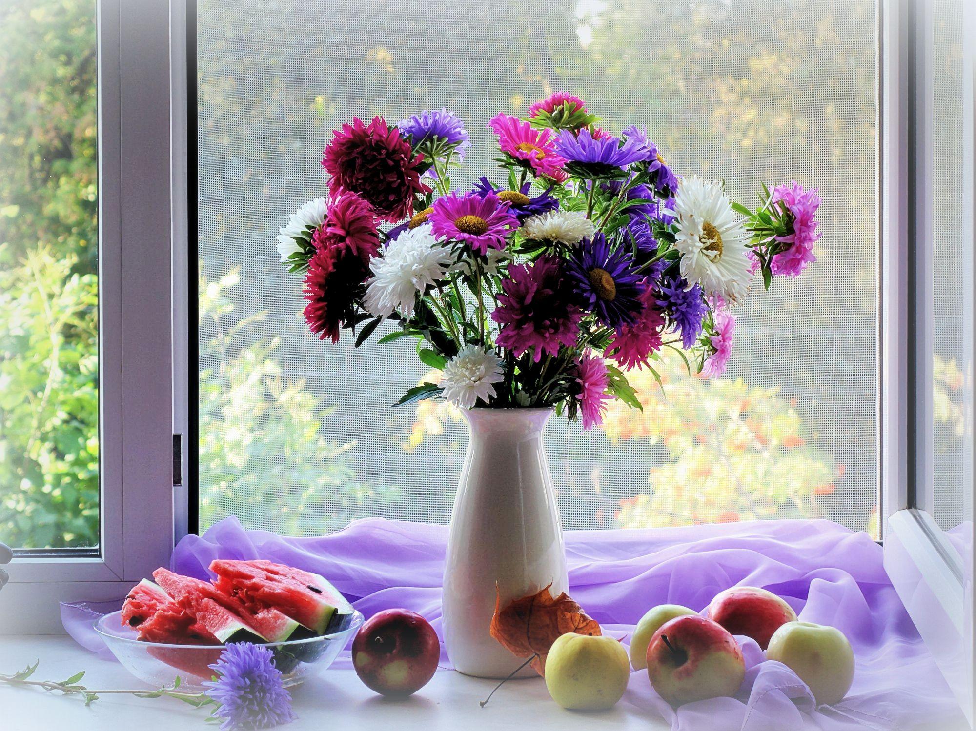 мире существует фотонатюрморты цветы на окне молод