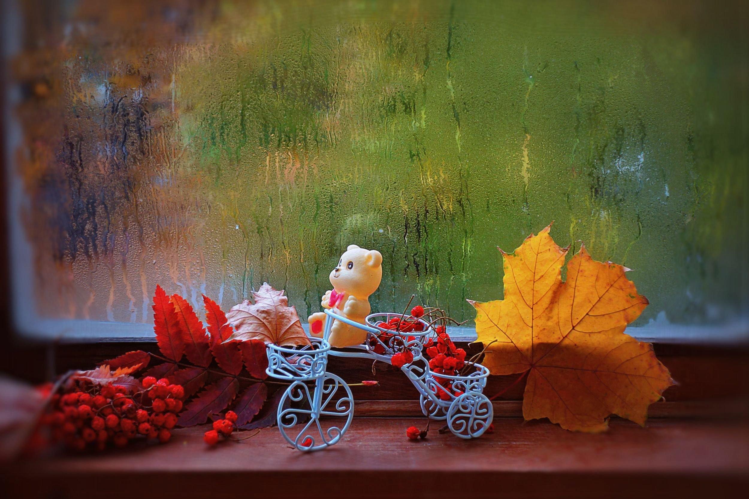 картинки фото с добрым утром с дождливая осень чарушина отличаются свежестью