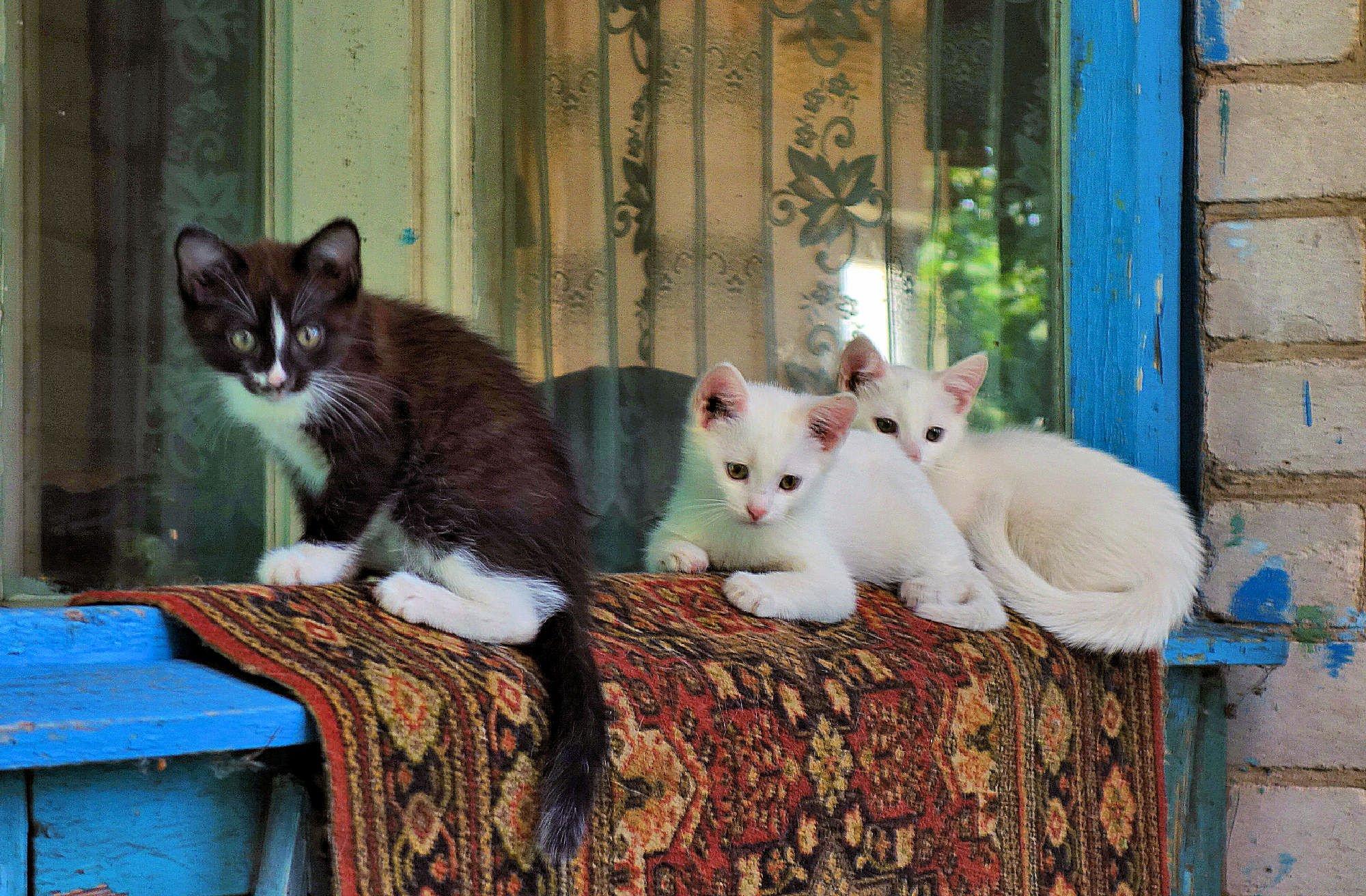 вам котята в деревне фото столе