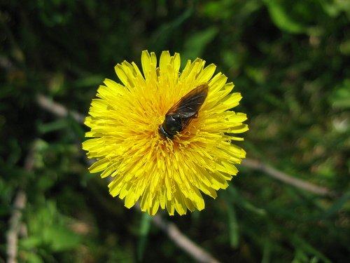 Нырнула муха за нектаром