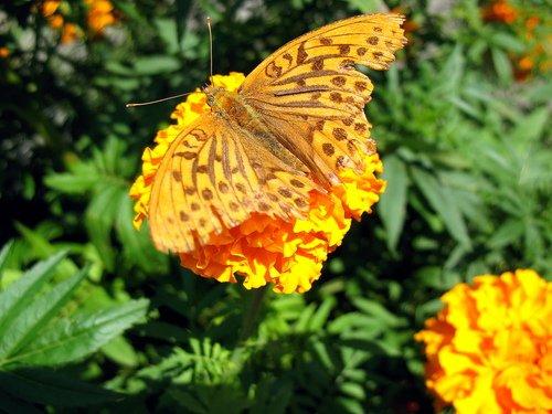 Бабочка участница боевых действий.