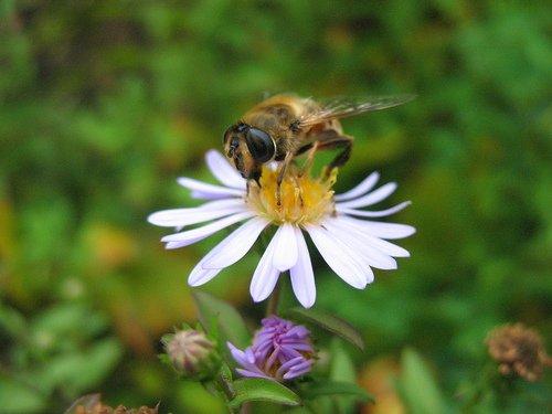 Большая муха или маленький цветок
