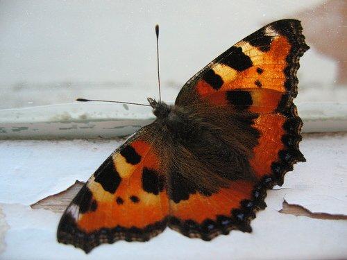 К нам залетела бабочка
