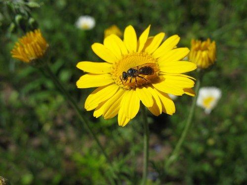 Маленькая пчёлка