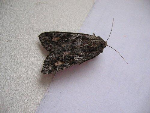 Ко мне в окно залетела бабочка