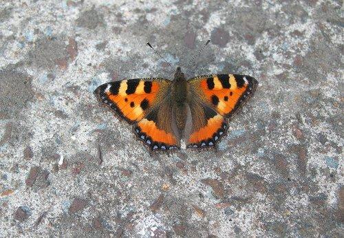 Бабочка на бетоне