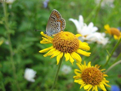 Цветочки с бабочкой