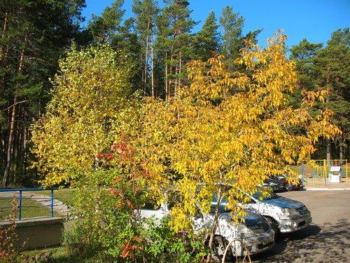 Осень она и в городе осень!