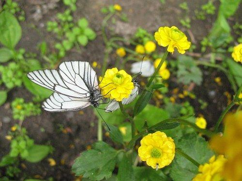 Жёлтые цветочки и бабочки