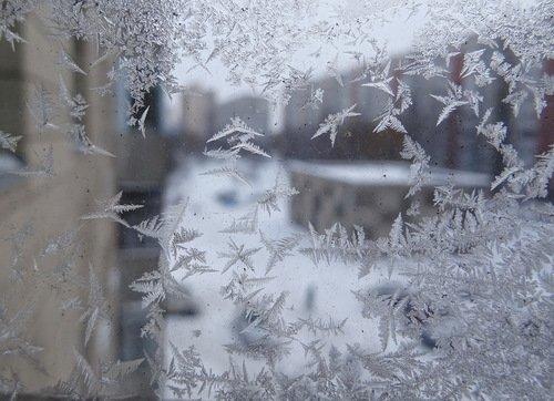 Зимние бабочки